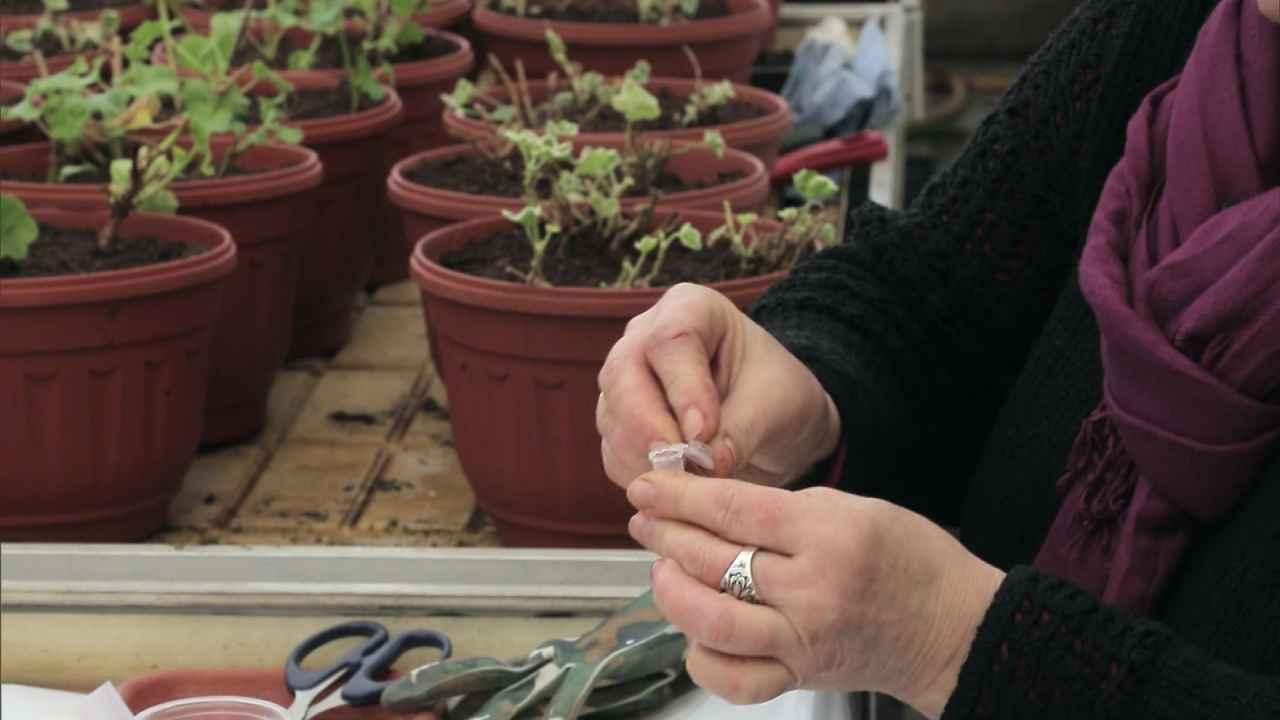 Способы обработки семян перед посевом