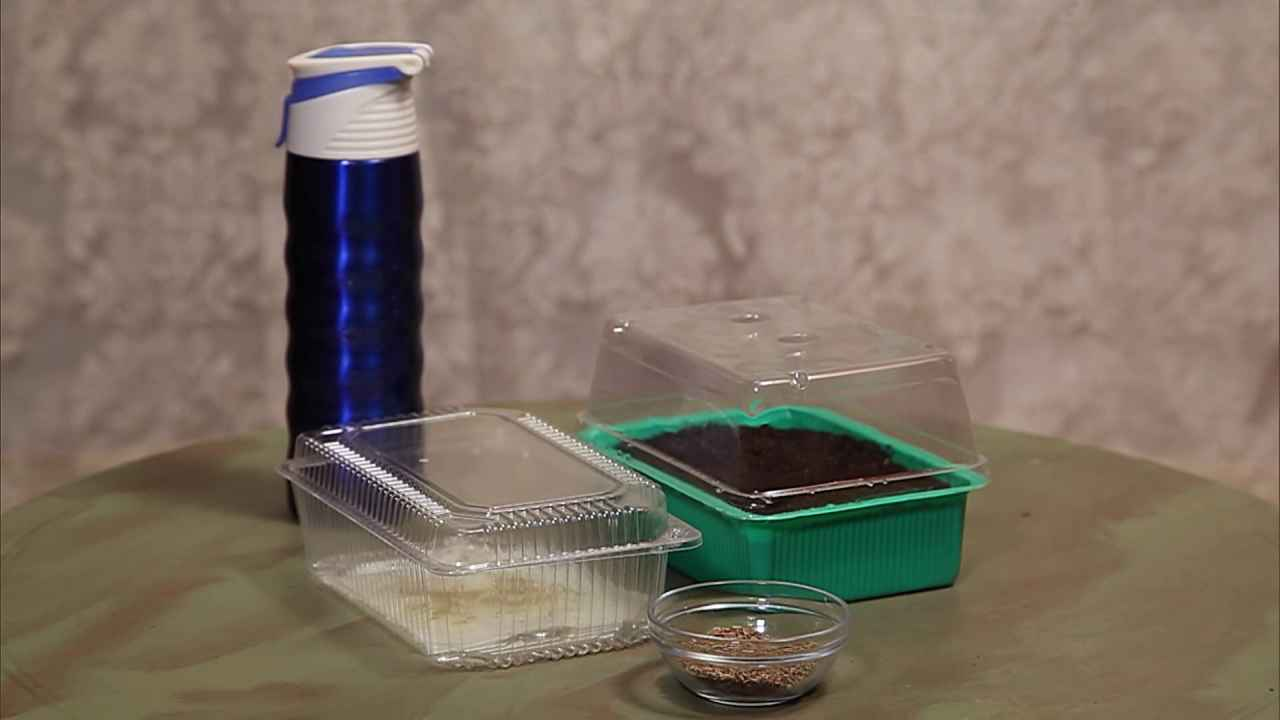 Два способа подготовки семян перед посевом