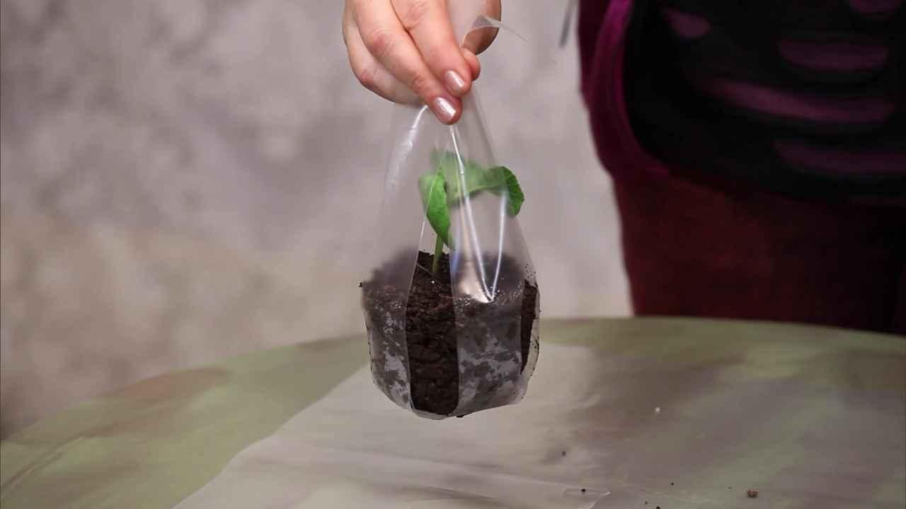 Плёночные ленты для высаживания рассады в открытый грунт