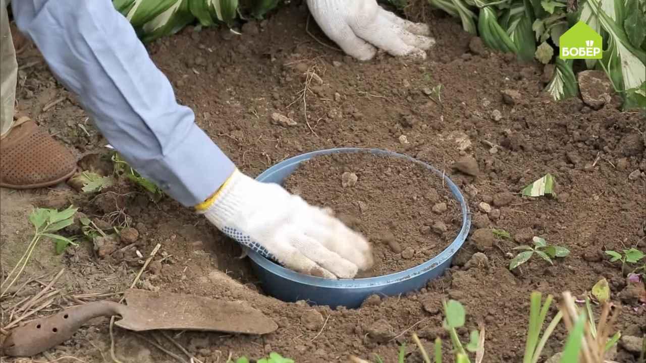 Как правильно посадить тюльпаны