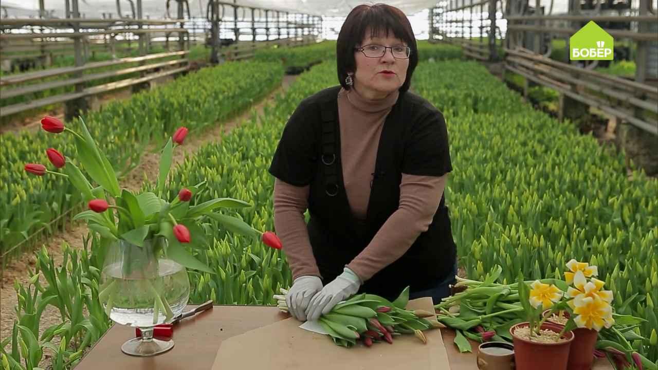 Как правильно хранить срезанные тюльпаны
