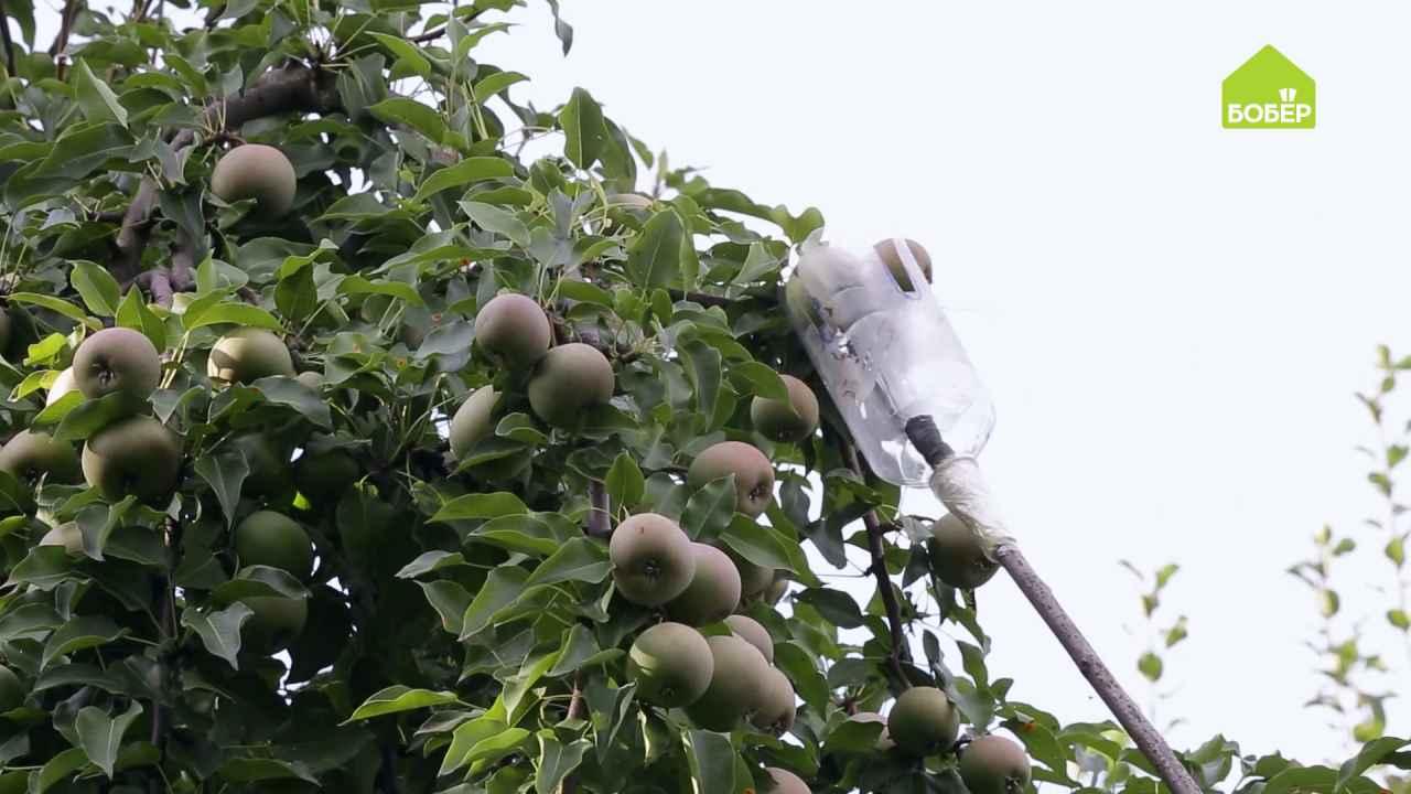 Плодосборник для фруктов своими руками