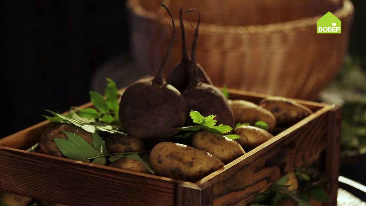 Как правильно хранить урожай картофеля