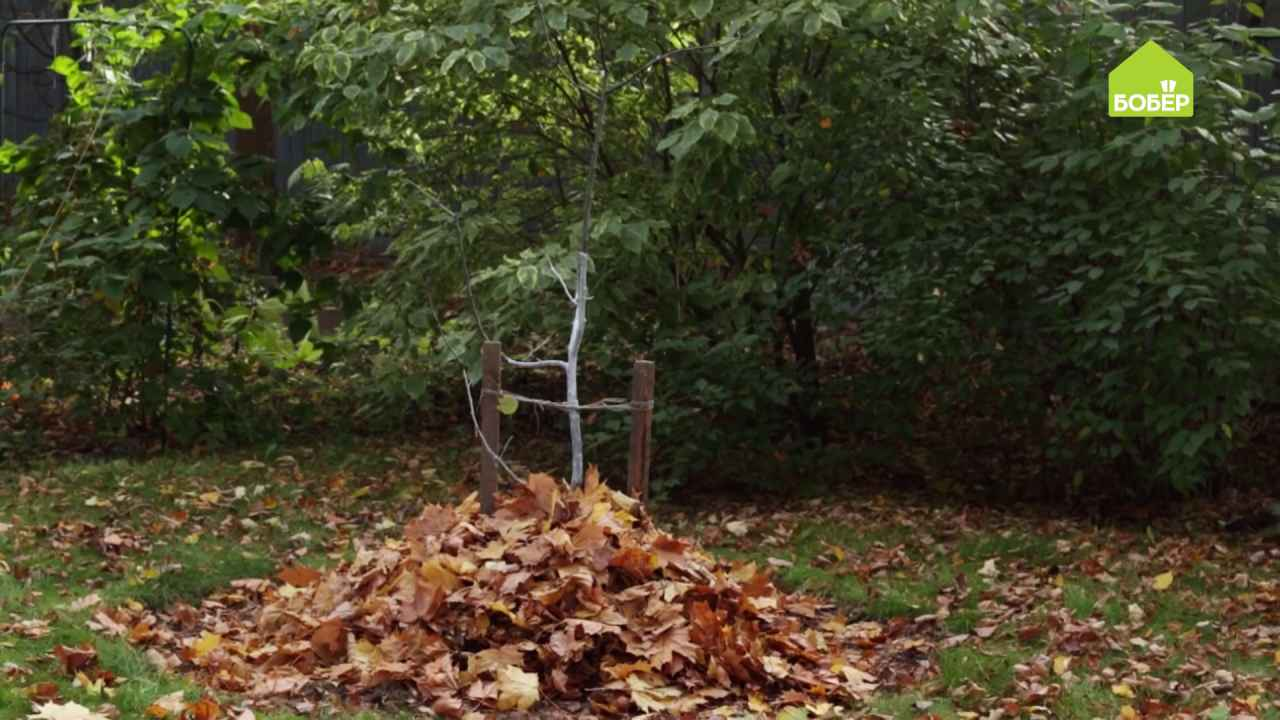 Закаливаем корни деревьев перед зимовкой