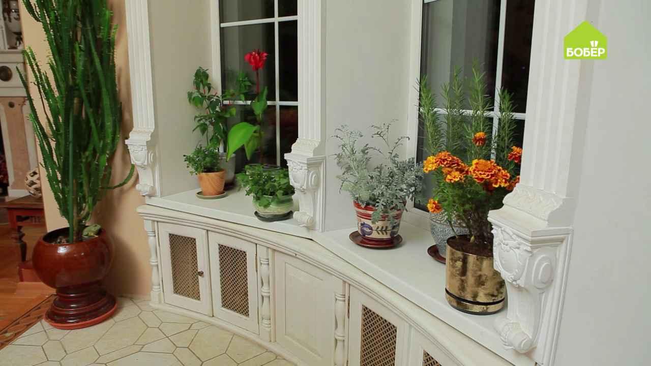 Берём растения из сада домой на зимовку