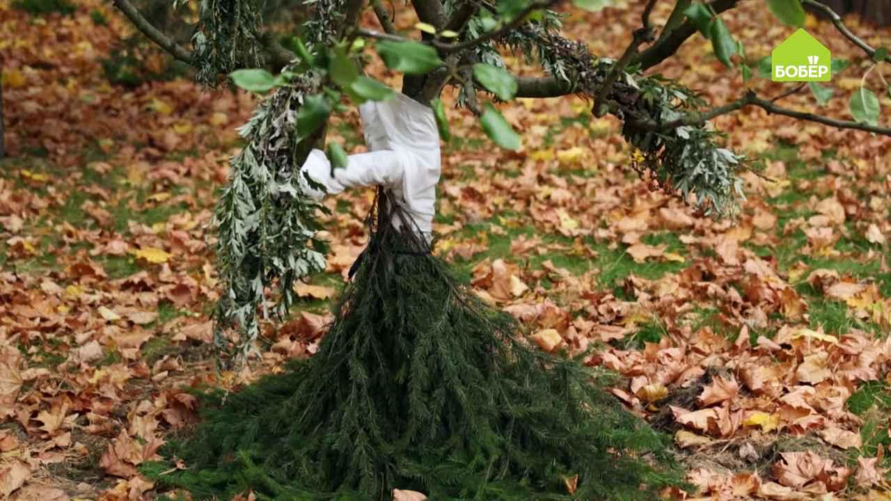 Готовим плодовые деревья к зиме: нетканый материал вместо побелки