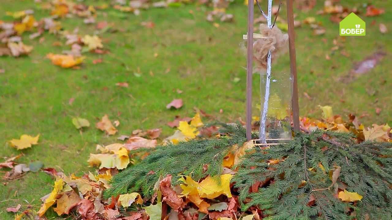 Подготавливаем молодые деревья к зиме: чехол из пластиковой бутылки