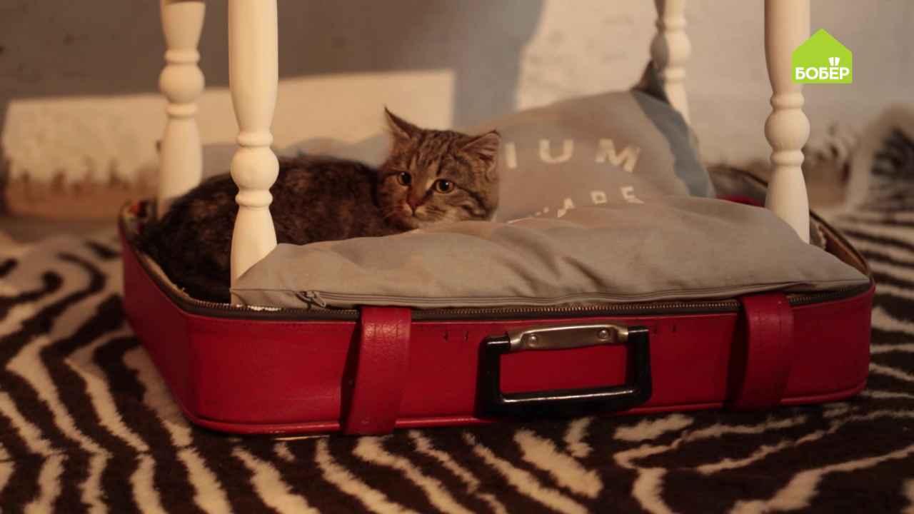 Двухъярусная лежанка для кошки