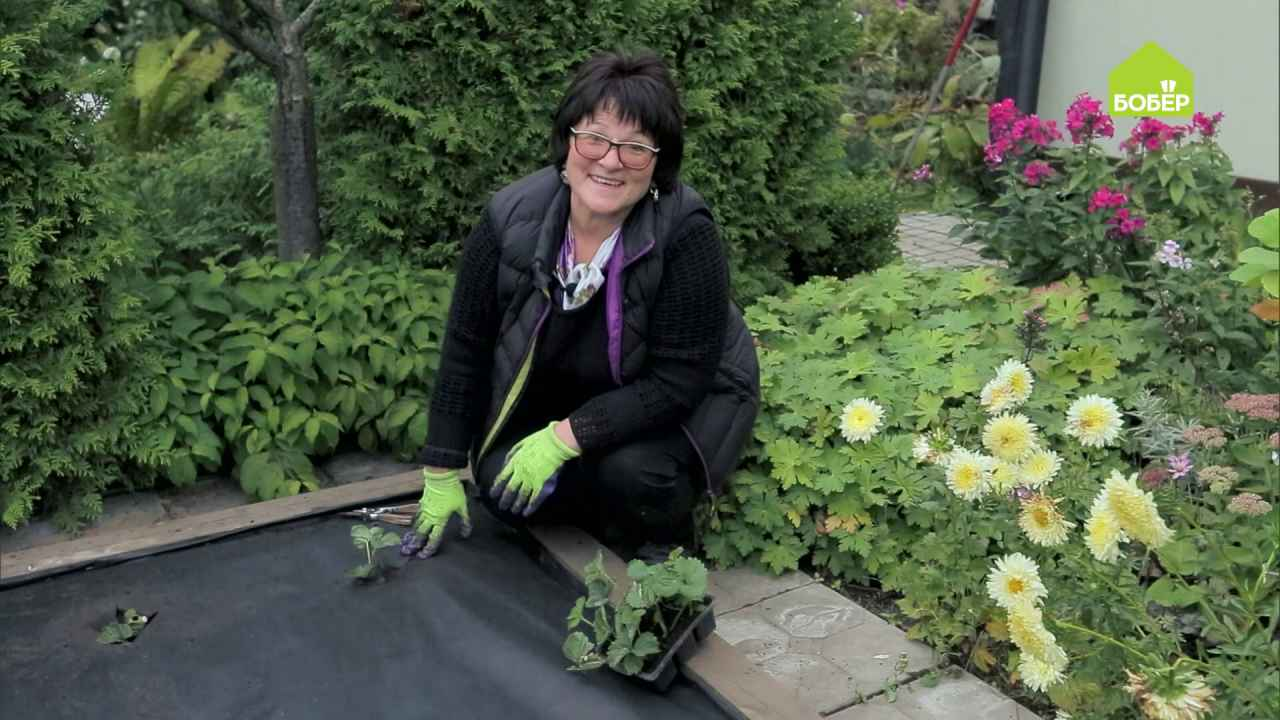 Сажаем садовую землянику на нетканый материал