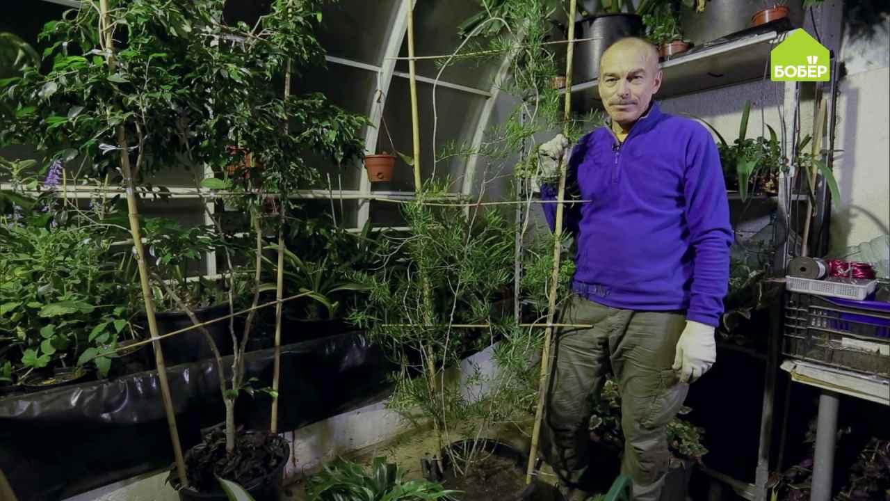 Как сделать опору для растения
