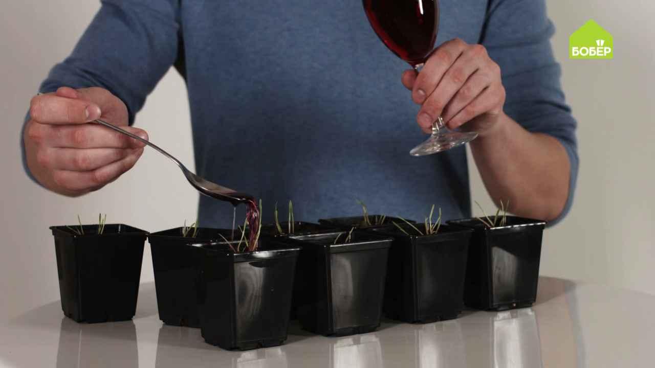 Лайфхаки: вино в быту