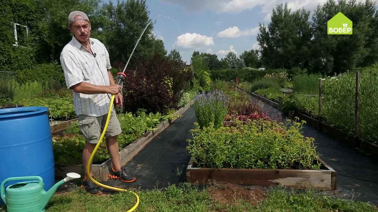 Поливаем растения в саду