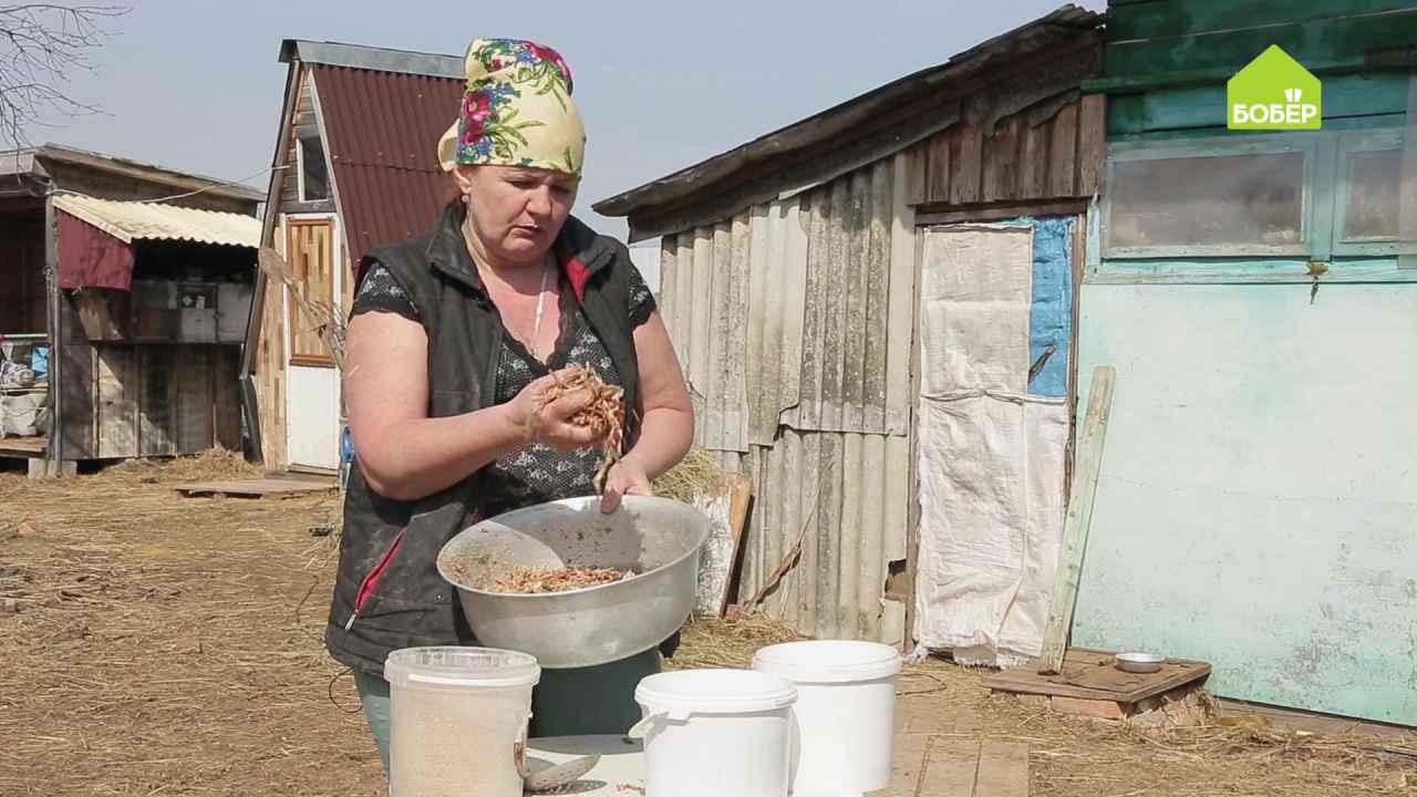 Как приготовить сочный корм для свиней