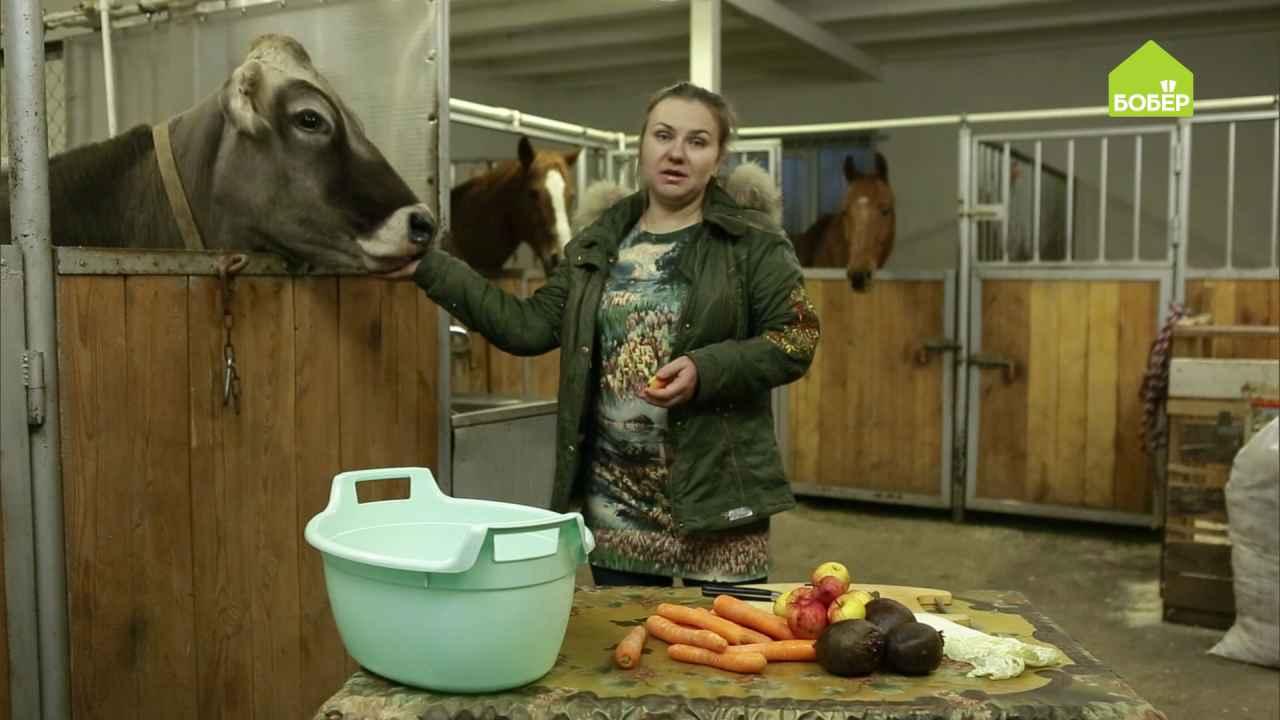 Овощи и фрукты в рационе домашних животных