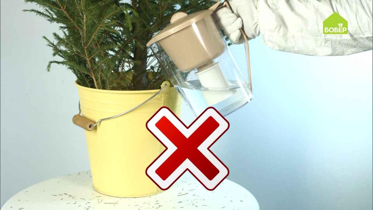 Антилайфхаки: продлеваем жизнь новогодней ёлке и пользуемся гирляндой правильно