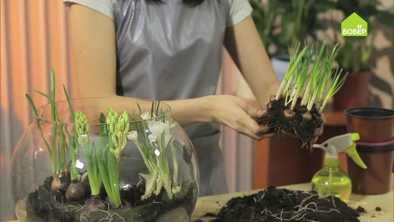 Весенняя композиция из луковичных растений
