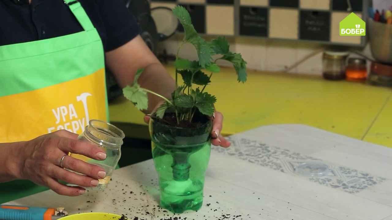 Контейнер с контролем воды для пересадки растений