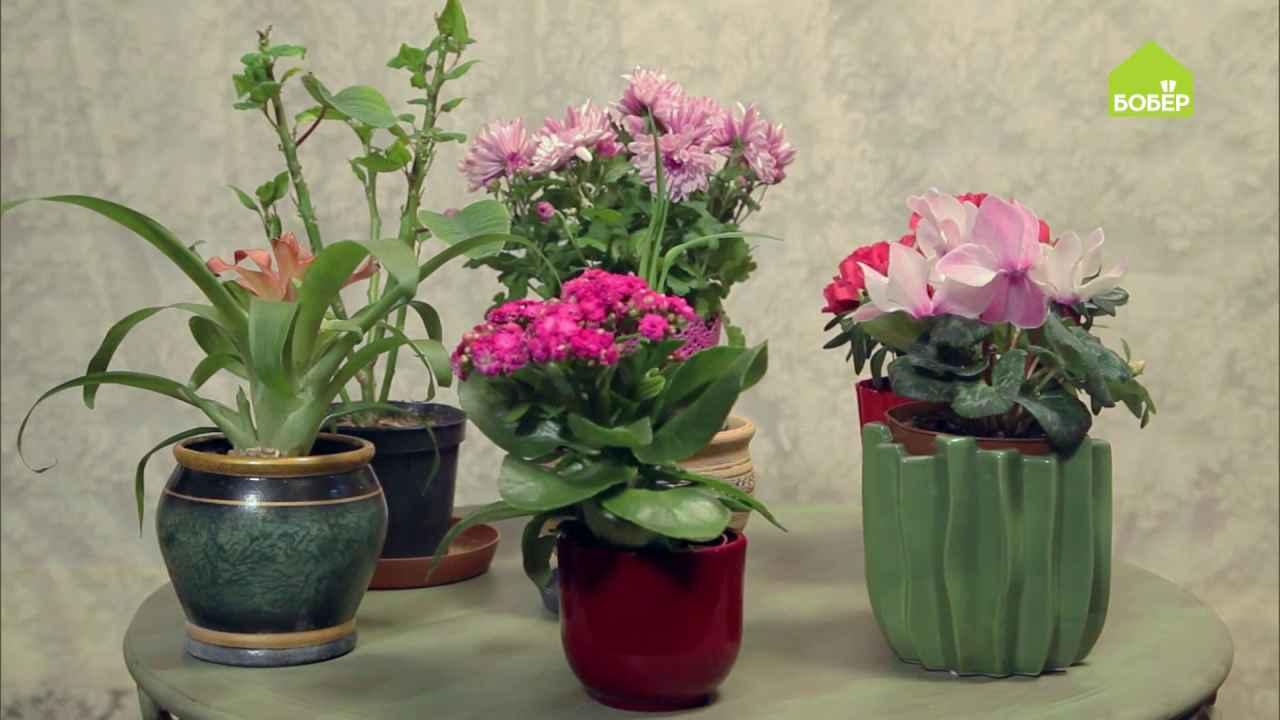 Как поступить с цветами в горшках после цветения