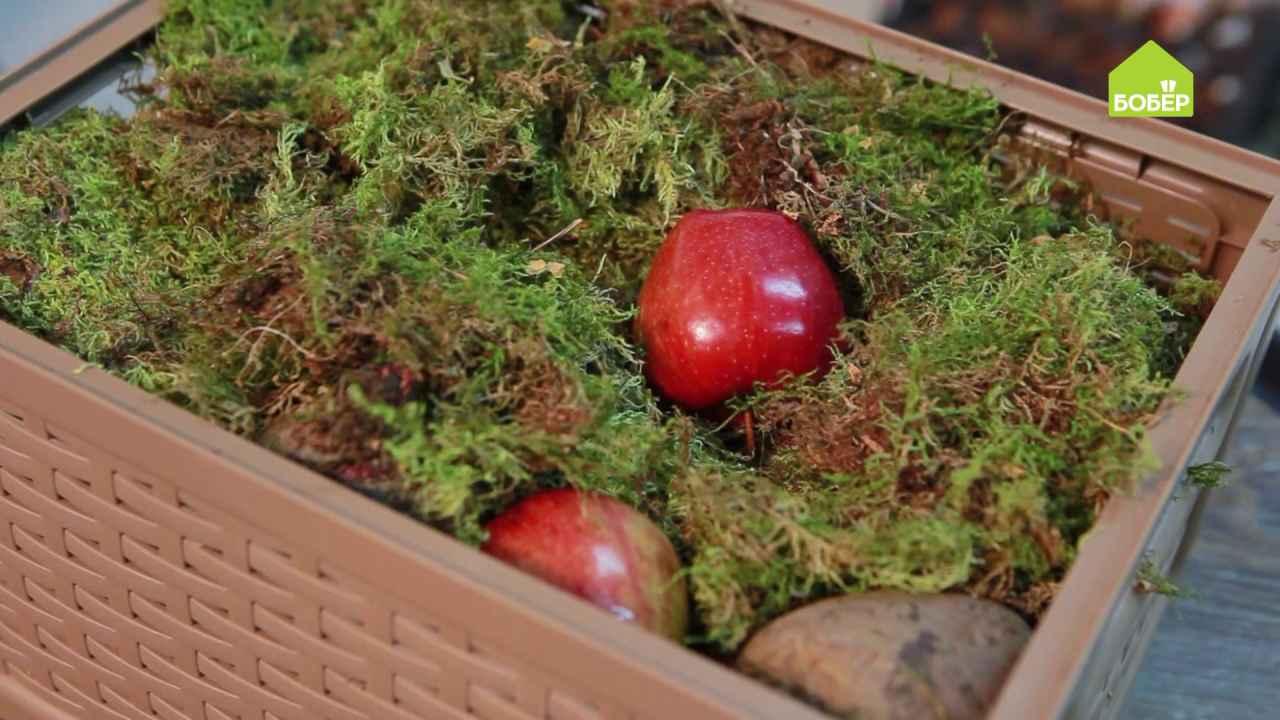 Закладываем корнеплоды на хранение: 2 способа
