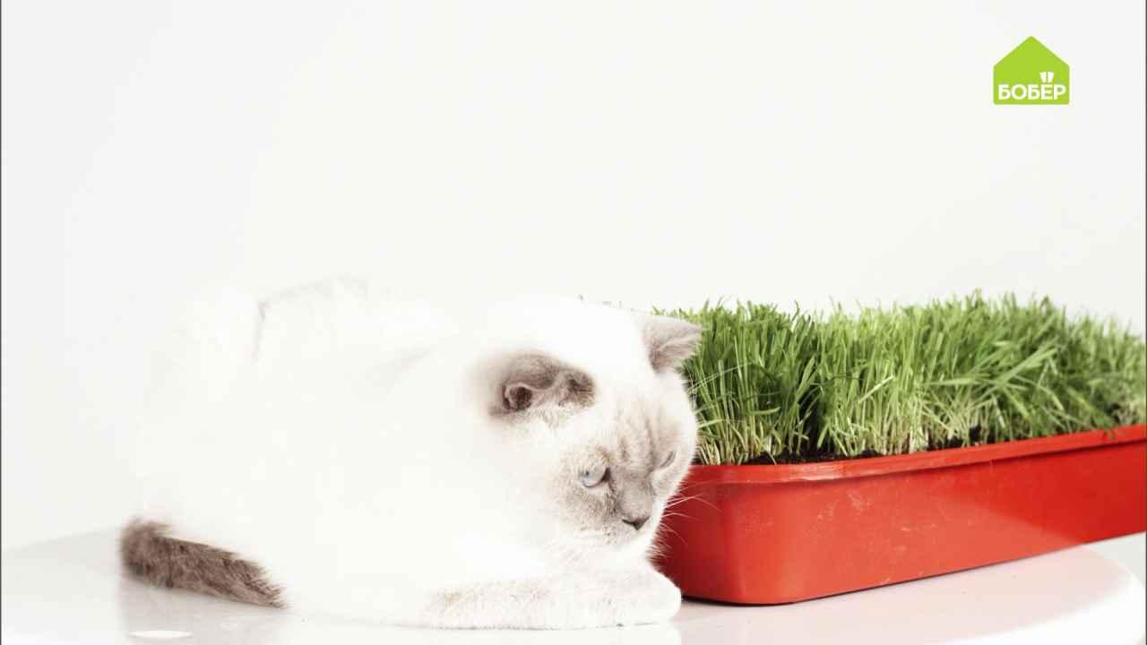 Лайфхаки для котов и котовладельцев