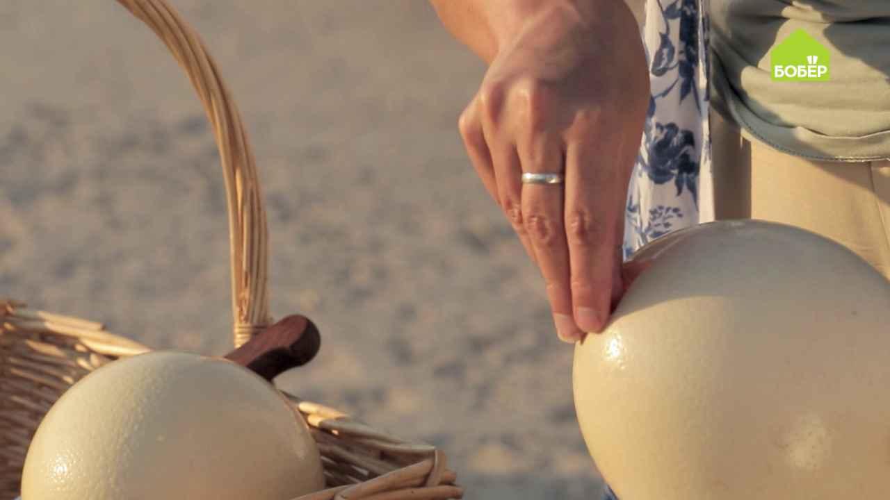 Чтобы разбить страусиные яйца эти птицы используют камни поле чудес